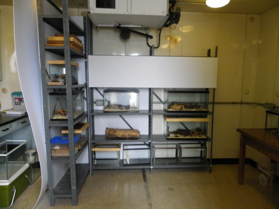 University of Manitoba insectary after upgrade partially funded by ESC Public Encouragement Grant (Photo: Matt Yunik)