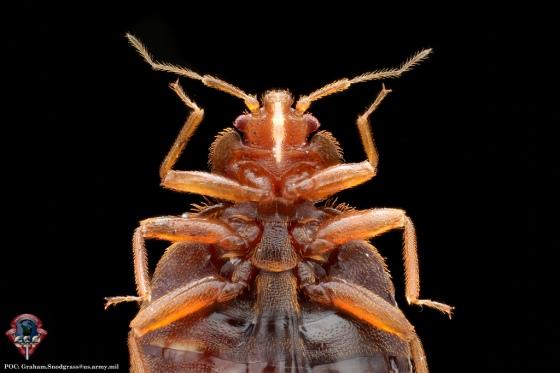 AFPMB bedbug2