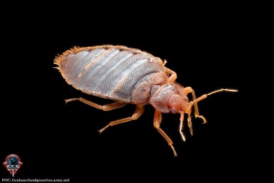 AFPMB bedbug3
