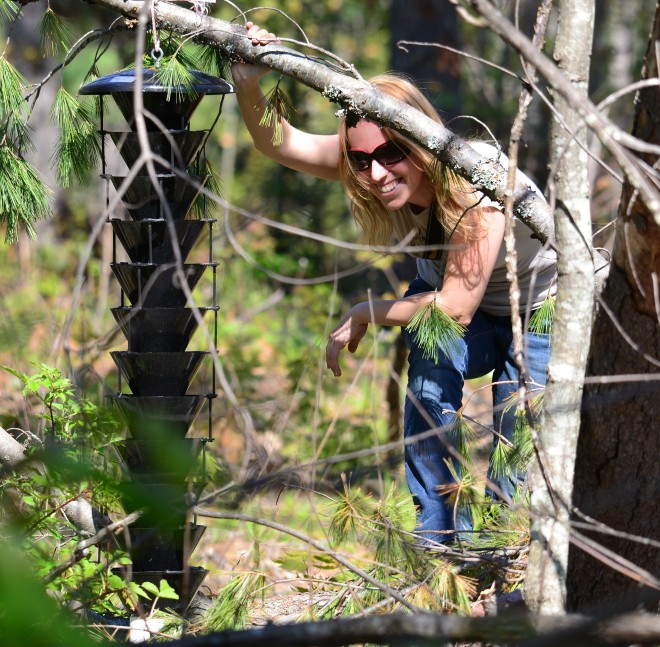 Amanda Lindeman with a funnel trap (baited with pheromones and host tree kairomones to attract bark beetles) – photo credit: Michael Connolly.