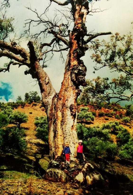 The author's children during a 2003 camping trip to the Flinders Ranges of South Australia.
